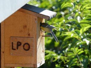Un nichoir à oiseaux
