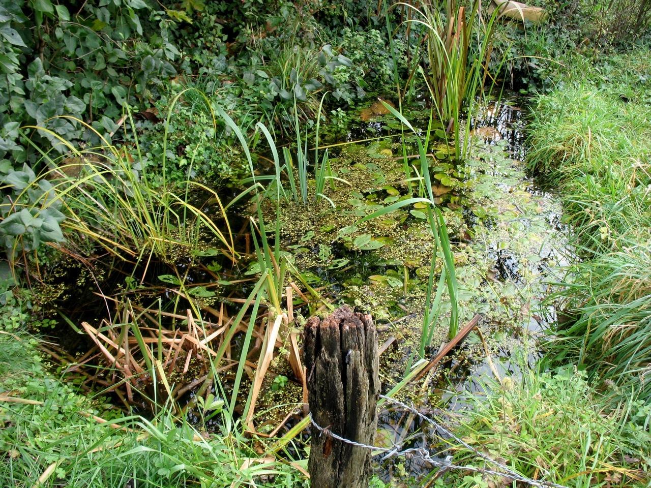Défi : 100 refuges de biodiversité avant l'été